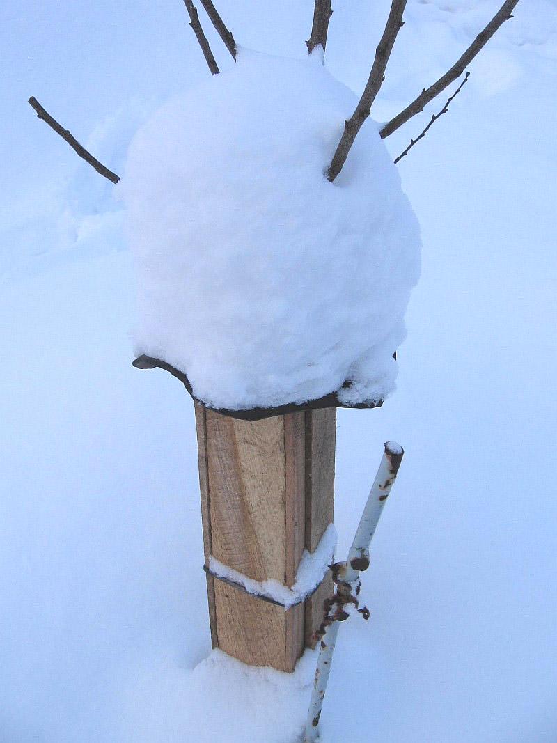 Подготовка деревьев к зиме – это их подрезание и укрытие от грызунов