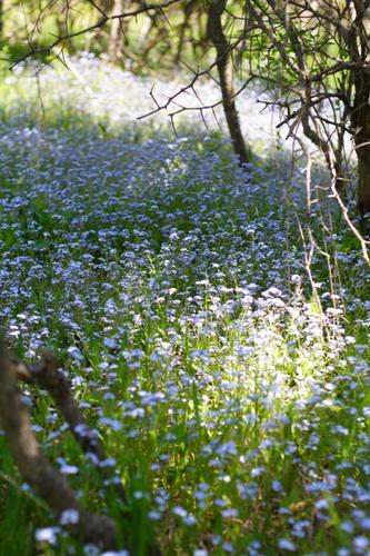 Цветы для озеленения приусадебного участка